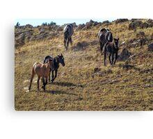 Garcia Herding His Band- Pryor Mustangs Canvas Print