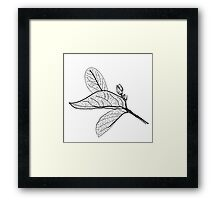 Leaves contours on white background Framed Print