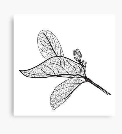Leaves contours on white background Canvas Print