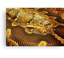 Boa constrictor Up Close Canvas Print