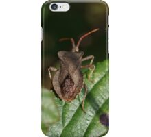 Shield Beetle iPhone Case/Skin