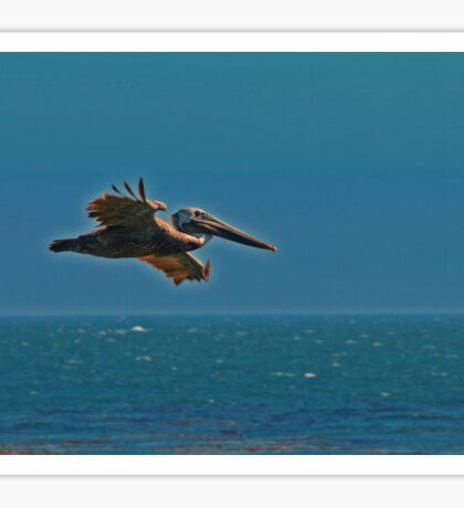 Pelican in flight Sticker