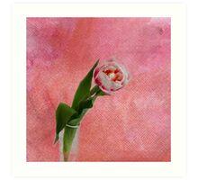 April tulip  Art Print
