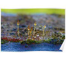 Macro Moss Grass 2 Poster