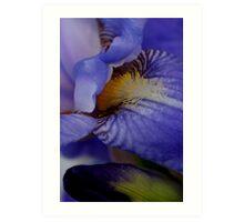 blue iris flower and bud abstract Art Print