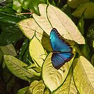 United Arab Emirates. Dubai. Butterfly Garden. Blue on Green. by vadim19