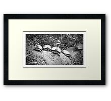 Because Turtles are the best Framed Print