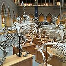 Evolution by Robert Steadman