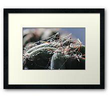 Cacti and Spider Webbing Framed Print
