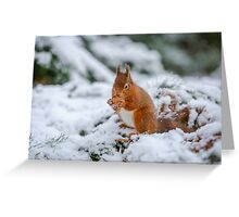 Red squirrel gathering food Greeting Card