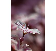 white and pink (1) Photographic Print