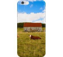 Cows of Mabou iPhone Case/Skin