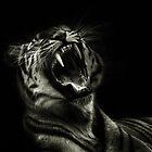 Hear Me Roar  by larry flewers