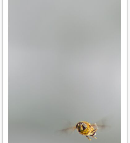 Bumble Bee in flight Sticker
