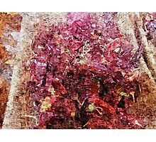 Spice Market in Hatzor Photographic Print