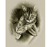 Bengal Cat Couple, Pencil Drawing Photographic Print