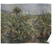 Auguste Renoir - Field of Banana Trees 1881  Impressionism, Landscape Poster