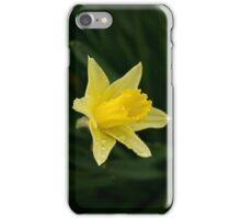 Narcissus Daffodil and leaves iPhone Case/Skin