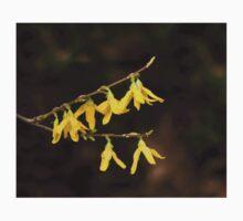 Forsythia Yellow Flowers Baby Tee
