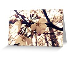 Dogwood Blossoms Greeting Card