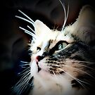 Calico Cat - Willow  by Laurast
