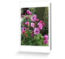 So Pretty-in-Pink - Anemones in the Keukenhof Gardens Greeting Card