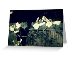Contrast Blossoms  Greeting Card