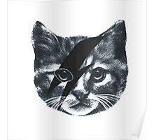 Stardust Cat Poster