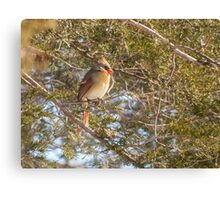 Cardinal Female In Evergreen Canvas Print