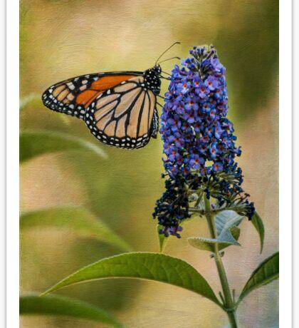 Monarch on butterfly bush Sticker