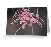 Bottle brush flower beauty Greeting Card