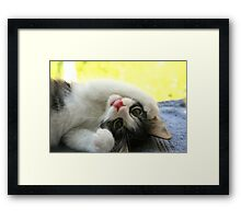 Silly Kitten Framed Print
