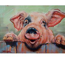 Perky Pig Photographic Print