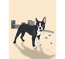 Attack of the Colossal Boston Terrier!!! Photographic Print