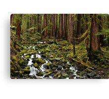 Olympic National Park Forest Canvas Print