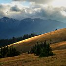 Hurricane Ridge by LizzieMorrison