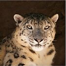 snow leopard  by roger smith
