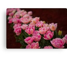 Tulips in a Row Canvas Print
