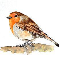 Robin,birds,wildlife Photographic Print