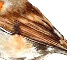 Robin,birds,wildlife Sticker