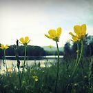 Yellow River Blossoms by nannowandnext