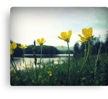 Yellow River Blossoms Canvas Print