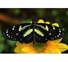 Black and Yellow Butterfly on a Flower Photographic Print