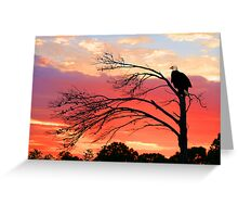 BALD EAGLE SUNSET Greeting Card