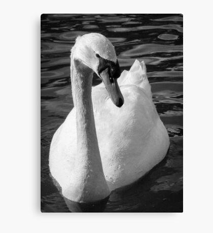 Monochrome Swan Canvas Print