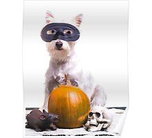 Happy Halloween Dog Poster