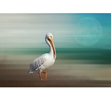 A Walk On The Wild Side Photographic Print
