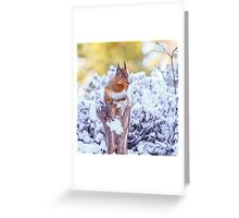 Red squirrel in Winter  Greeting Card