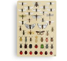 Entomology Insect studies collection  Metal Print