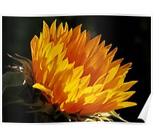 Here Comes the Sun Flower Poster